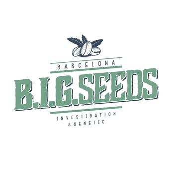 bigseeds semillas marihuana feminizadas, big seeds barcelona investigation genetic, semillas marihuana barcelona