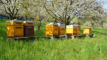 Bienenkästen Imkerei Auenblick