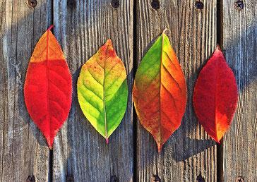 Herbst, Blätter, Garten
