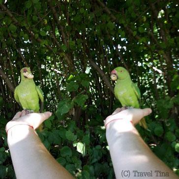 Zutrauliche Papageien im Hyde Park.