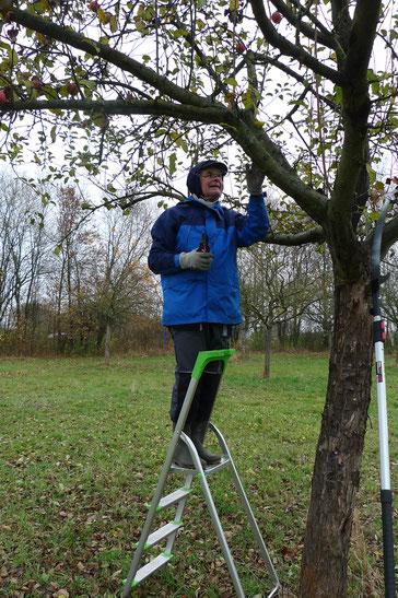 Mitglied beim Baumschnitt