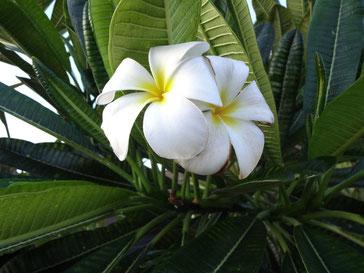 ハワイへは、音楽教室の同期と行きました♡
