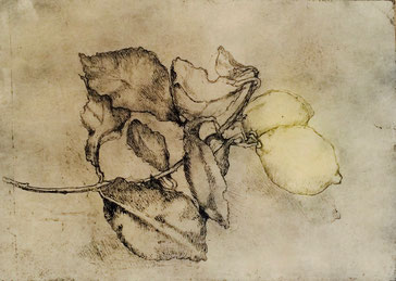 Giuseppina Goglia, I limoni