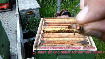 #Bienenkönigin