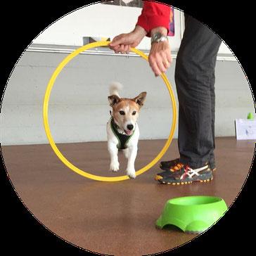 Hund Crossdogging Posten Training