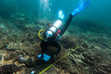 AIMS diver doing a bleaching survey. Copyright AIMS,, CCBY.