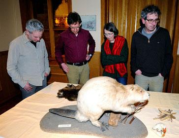 Das Exponat war durch langjährige Sonneneinstrahlung ausgebleicht und zeigte nicht die original Fellfarbe. Die Größe des Eurasischen Bibers jedoch erstaunte die Naturfreunde