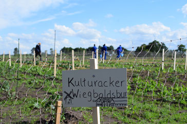 Kulturacker. Foto: Carina Laudemann