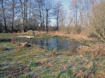 Teich Gomaringen Foto: K-H Kuhn