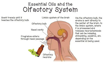 How Essential oils effect the brain