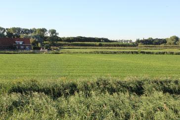 Berendrechtse polder