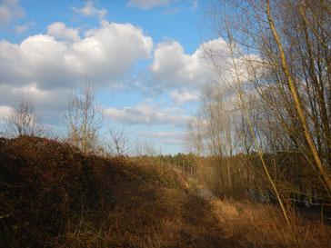 Opmaak natuurbeheerplan 'Zandgroeve aan de Kerkhoef' in Peer (2018)
