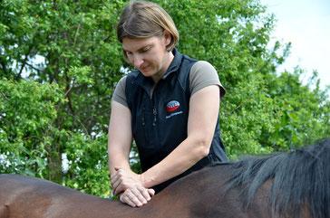 Chiropraktik Pferd München Rückenschmerzen Kreuzgalopp taktunrein