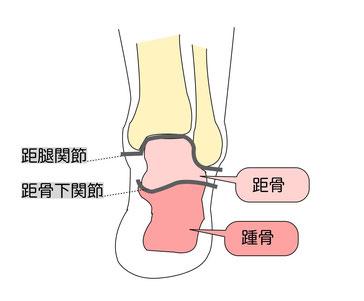 距腿関節と距骨下関節