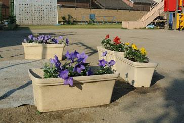 マリーゴールド、サルビア、そして市の花のキキョウです。