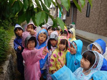 「葉っぱから雨が落ちてるよ!」
