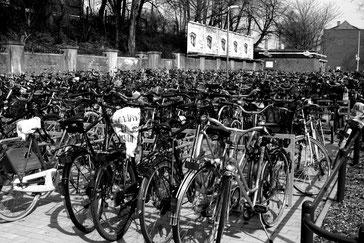 Fahrräder gibt es wie Sand am Meer, doch zu welchen passen Revolights?
