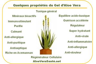 Propiétés et composants de l'aloe vera | Gel ou pulpe d'aloe vera à boire