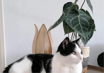 Foto © Cees, kat van één van mijn klanten