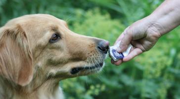Hundeschule, Hundetraining, Hundeschule Butzbach