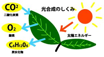 光合成の仕組み