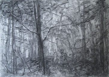 Through The Forest II
