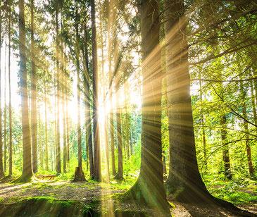 Foto eines Waldes mit Sonnenstrahlen
