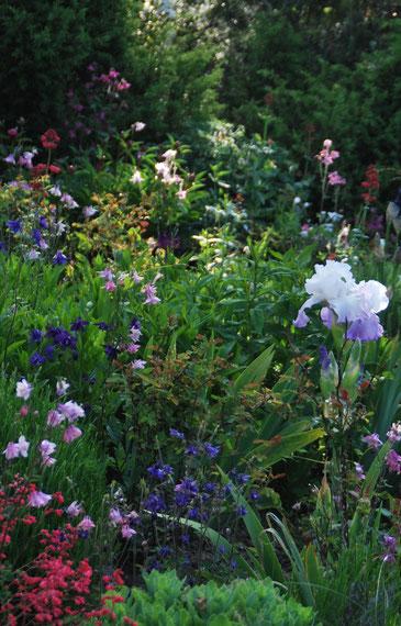 Entretien de massifs de plantes vivaces jardin vivace for Entretien plantes vivaces