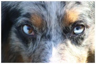 Wenn Hunde wüssten, was auf dieser Welt alles für seltsame und dumme, veraltete Aussagen bezüglich Welpenerziehung gemacht würden, könnten sie nur den Kopf schütteln....