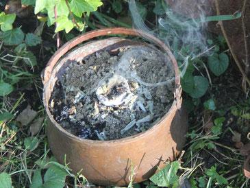 Gartensalbei, Wiesensalbei, Hexenkessel