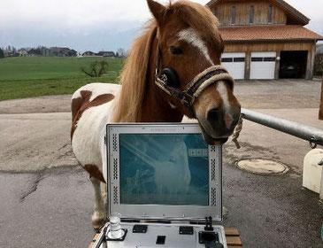 EAVET® Equin-Scanningsystem (Metavital Horse)