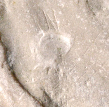 Detail of inoceramid bivalve fragment (c.80MYA) from St Margarets Bay and imprint of tiny attached shell or perhaps fish scale.