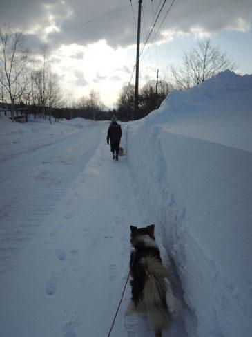 道路脇の雪の壁がまた高くなってました