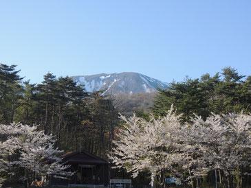 相の沢キャンプ場よりスタート!桜が満開!