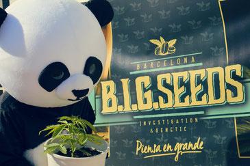 comparte la imagen BIG Seeds para entrar al sorteo de semillas de marihuana gratis