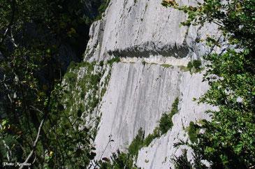 galgoslevrierspyrenees.jimdo.com