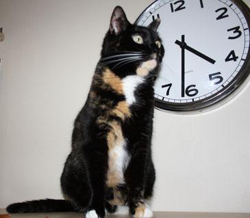 Seminare Pfoetchensitter kuhlcat Weiterbildung Katze