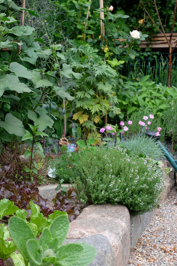 dieartigeGARTEN // Japanischer Bauerngarten mit Salat, Thymian, Malve, Rittersporn, Nelken, Salbei