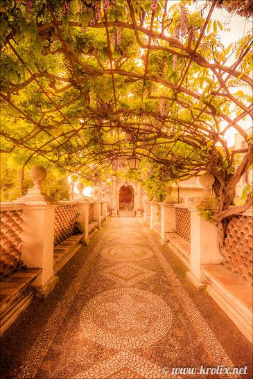 Туннель из ветвей