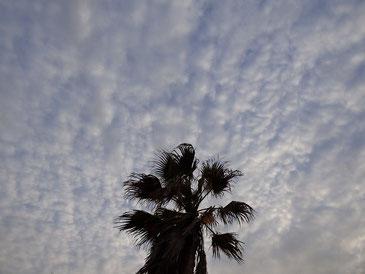 夕方のうろこ雲~
