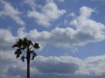 午後から風が強まり、少し出た青空~~! 今日から3月ですね!