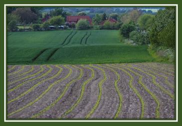 Ackerland, Agrarimmobilien, Grünland, Landwirtschaft, Immobilien, Ackerland kaufen, Grünland kaufen, Land kaufen, Ackerland verkaufen, Grünland verkaufen,