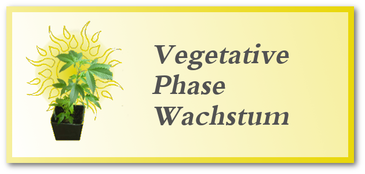 Wachstum & vegetative Phase