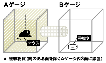 忌避試験装置(図)