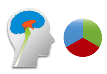 Triune Brain - Structogram, Biostruktur, Biostrukturanalyse