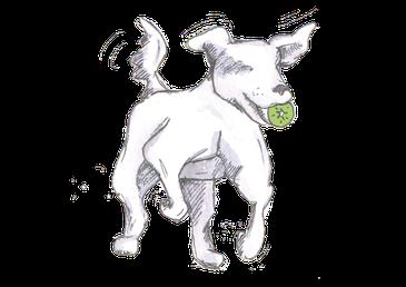Rückruf Hund