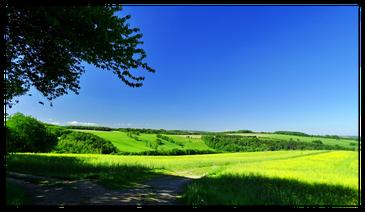 Auf dem Steinberg ins Tal blickend / Quelle: Bürgerverein