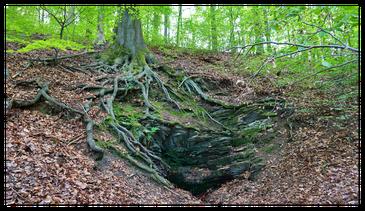 Osterquelle im Hangwald / Quelle: Bürgerverein