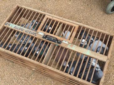 Nolan et les 10 pigeons voyageurs