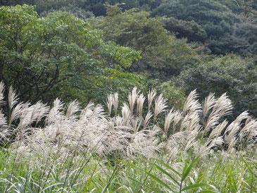 写真は、山田緑地。